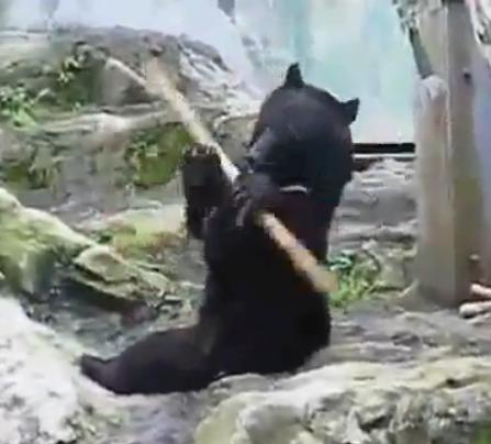 Baton twirling bear